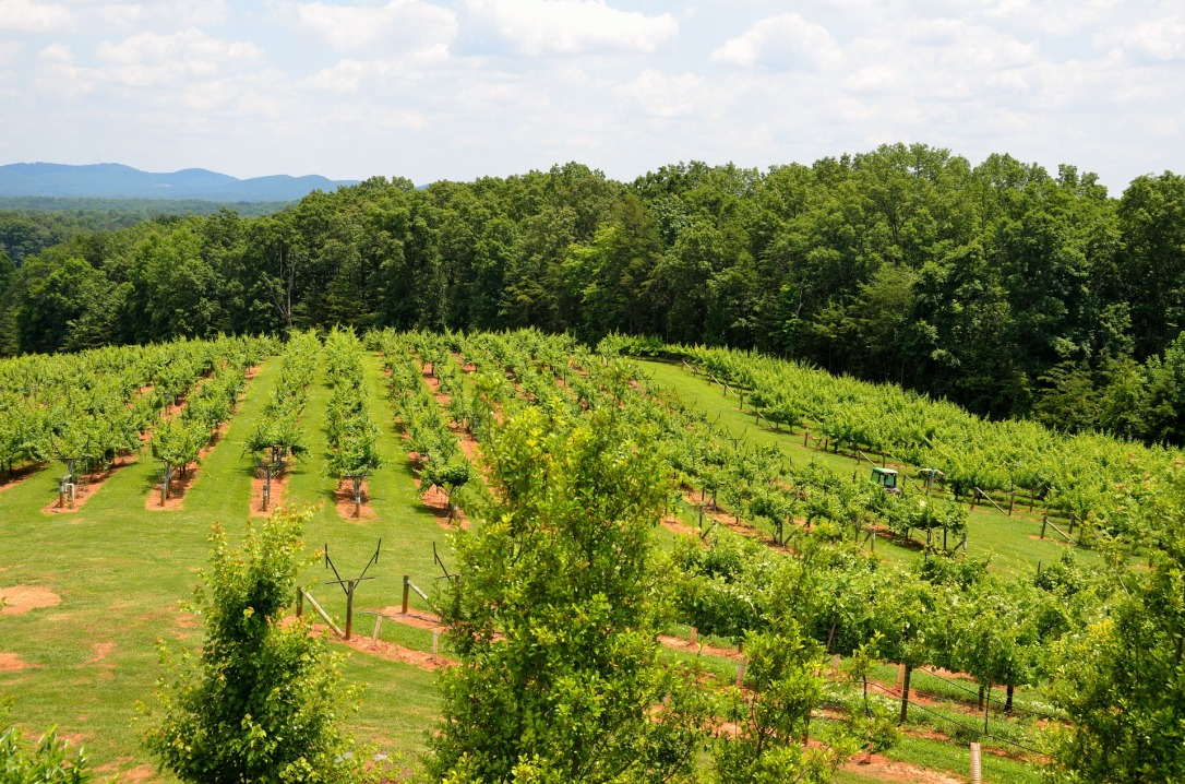 vineyard-1745531_1920